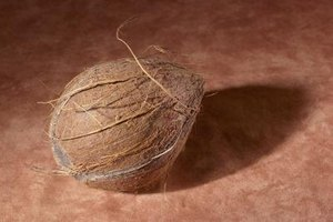 You can cook in coconut shells numerous times before they weaken.