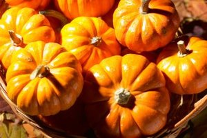 Pumpkins and other gourds are perfect for fall festival recipes.