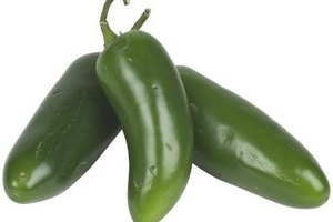 The heat of the jalapeno pepper is concentrated in the seeds and veins.