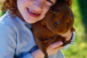 Guinea Pig Activities to Do With Kids