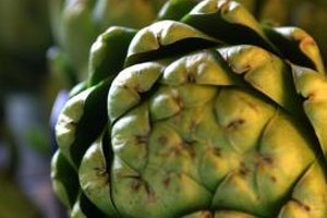 Steaming is the simplest way to cook a large artichoke.
