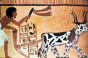 What Animal Was Used for Heavy Labor in Ancient Egypt?