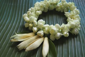 What Is the Meaning of the Jasmine Flower?