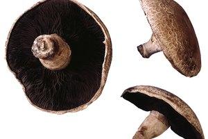 Valor nutricional de los champiñones Portobello