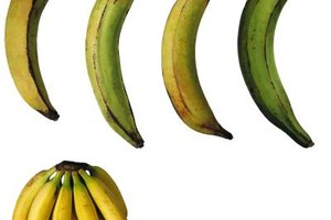 Plantains go from green to yellow to black as they ripen.