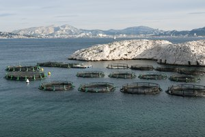 Grants for Fish Farms