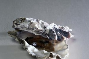 Oysters are best frozen within their shells.