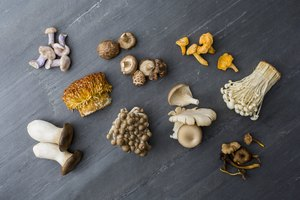 List of Gourmet Mushrooms