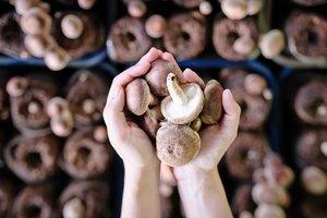 Truffle Vs. Mushroom