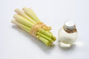 How to Ingest Lemongrass Oil