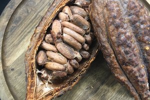 Here's the Deal on Raw Cacao, AKA the Healthy Version of Chocolate