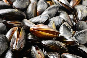 Can You Freeze Live Mussels?
