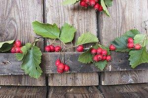 How to Make Hawthorne Berry Tea
