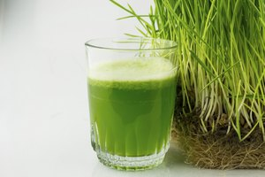 How to Store or Freeze Wheatgrass