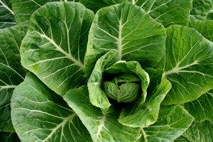 How to Fix Salty Collard Greens
