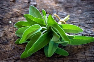 What Herb Can Be Used in Place of Sage?