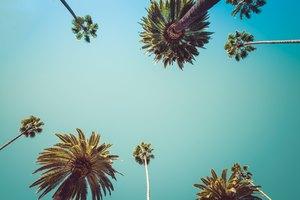 How to Make Palm Wine