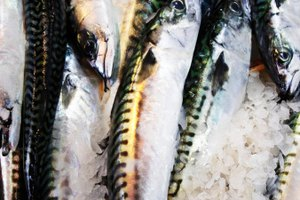 How to Freeze Mackerel