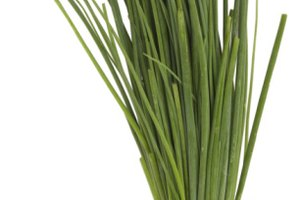 How to Prepare Chives