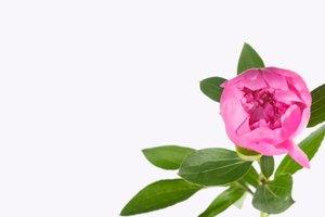 Remedios herbales para disminuir la testosterona en mujeres con SOP