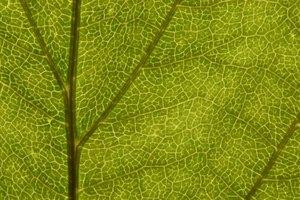 Similaridades y diferencias entre ósmosis y difusión