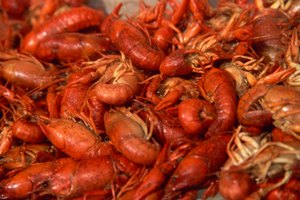 How to Keep Crawfish Alive Before Boiling