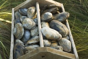 The Best Canned Clams