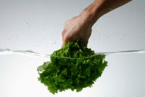 How to Blanch Lettuce