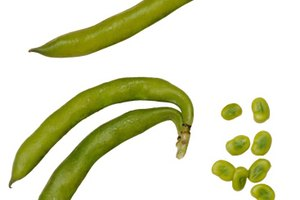 Substitutes for Fava Beans