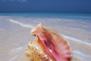 The Metaphysical Properties of Conch Shells
