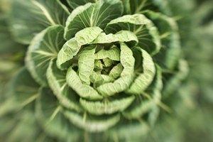 ¿Qué alimentos contienen celulosa?