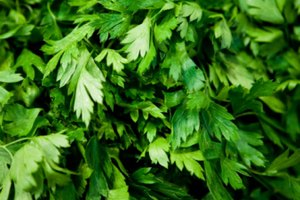 Cilantro Substitutes for Salsa