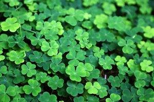 Irish Traditions Brought to America