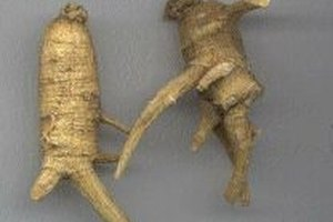 How to Use the Root of American Ginseng