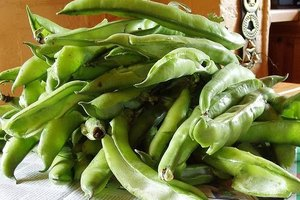 How to Freeze Broad Beans
