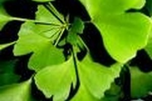 Herbs That Dilate Blood Vessels