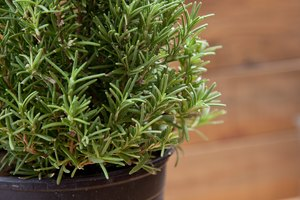 How to Prepare Fresh Rosemary