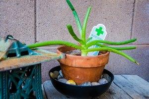 Make Your Own Aloe Vera Cream