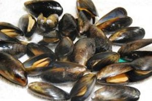 How to Tell if Mussels Are Bad