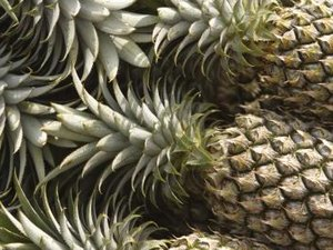 What Fruits Contain Papain or Bromelain?