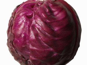 Does Purple Cabbage Contain Anthocyanins?