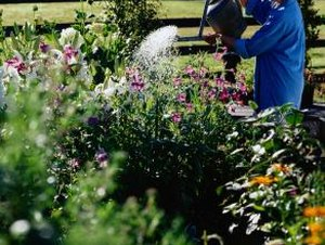 Yard Landscaping Ideas for Water Conservation