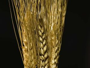 Is Gluten Intolerance Inherited?