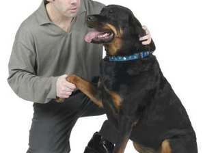 Do Rottweilers Raise Homeowner's Insurance?