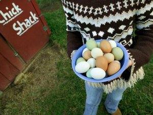 The Amino Acids Found in Eggs
