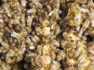 Organic Bee Pollen Benefits