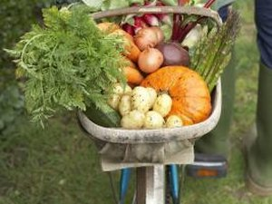 Benefits of Growing Your Own Vegetables