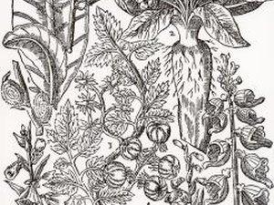 Jobs for Botanical Illustrators