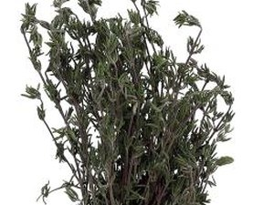 What Are the Health Benefits of Rosemary Oil?