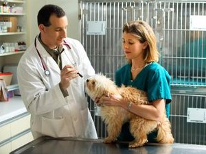 Classes Required for Vet Tech